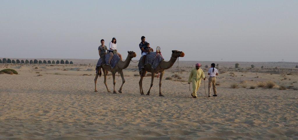 駱駝-6.JPG