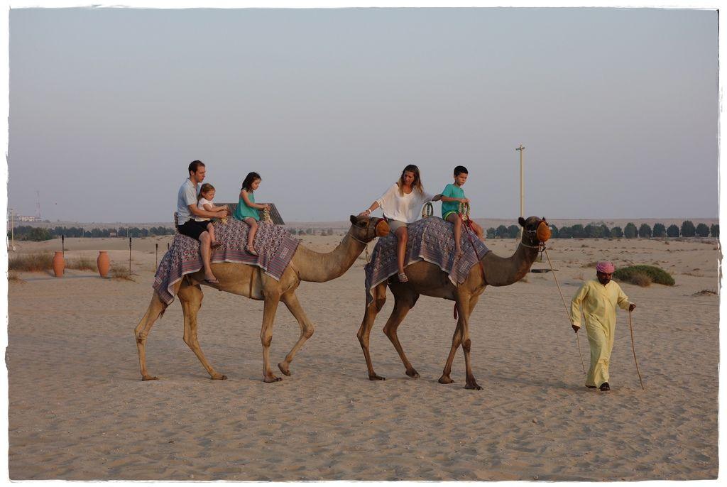 駱駝-9.JPG