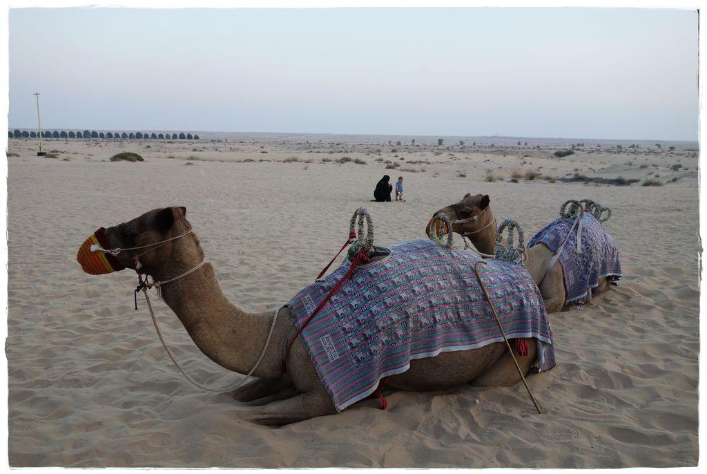駱駝-10.JPG