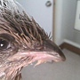 不知名的鳥