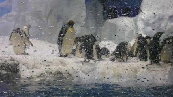 本日重點 企鵝