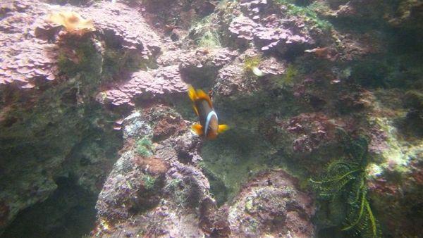 我最愛的小丑魚啦