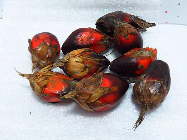 油椰子(百合芳嬌分享)