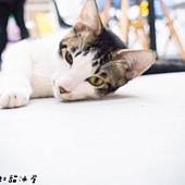 20150114彩虹貓冰屋29.jpg