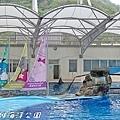 201504遠雄海洋公園海豚52.jpg