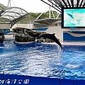 201504遠雄海洋公園海豚55.jpg