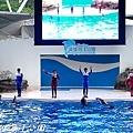 201504遠雄海洋公園海豚56.jpg