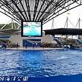 201504遠雄海洋公園海豚58.jpg
