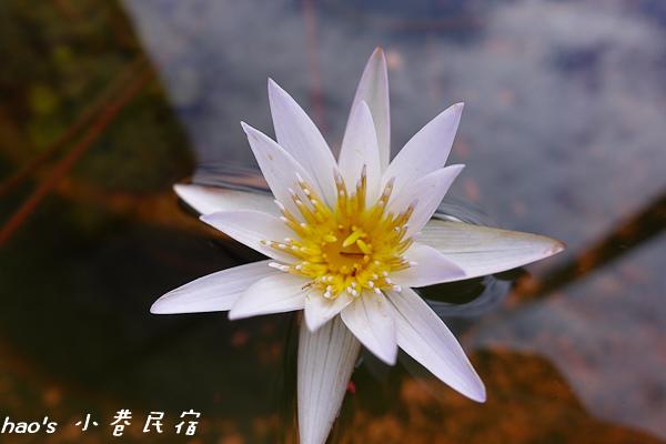 201511小巷民宿121.jpg