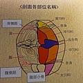 201602順億鮪魚專賣017.jpg