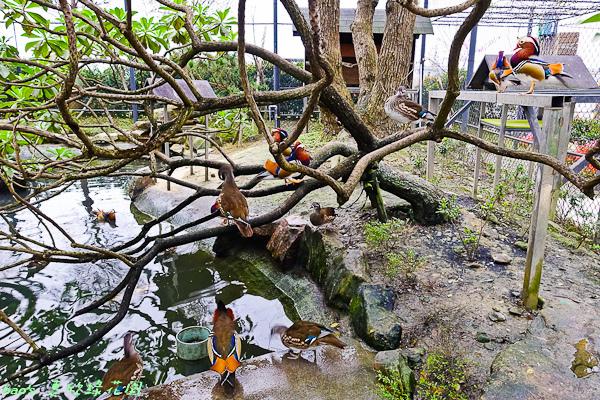 201602惠欣綠花園006.jpg