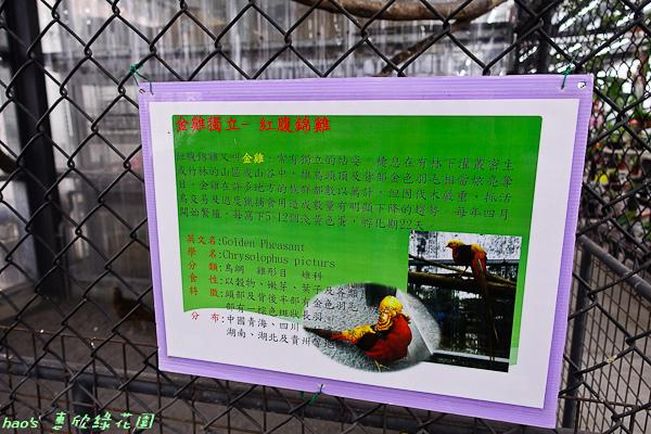 201602惠欣綠花園036.jpg