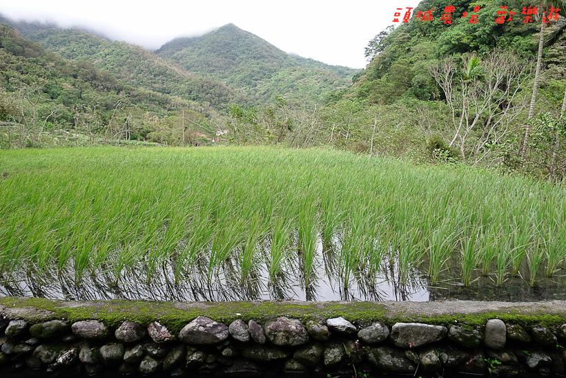 201610頭城農場103.jpg