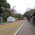 Day1_西公園賞櫻