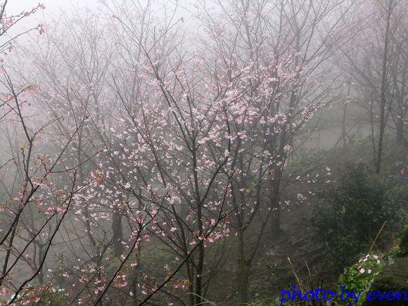 2012.03.04三芝花況1