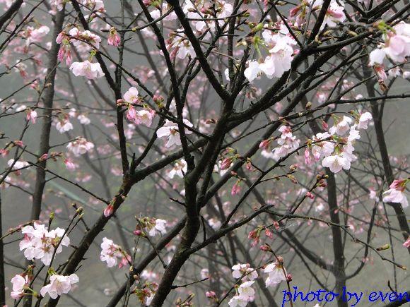 2012.03.04三芝花況3