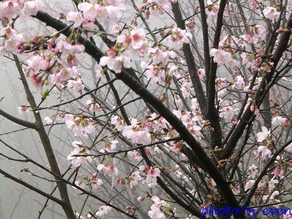 2012.03.04三芝花況4