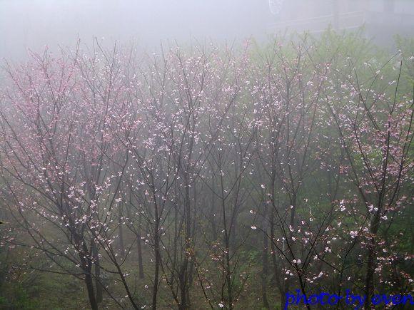 2012.03.04三芝花況8