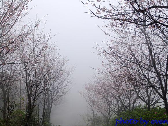 2012.03.04三芝花況9