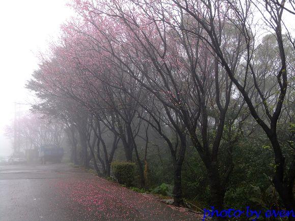2012.03.04三芝花況12