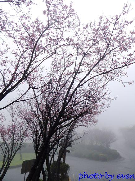 2012.03.04三芝花況15