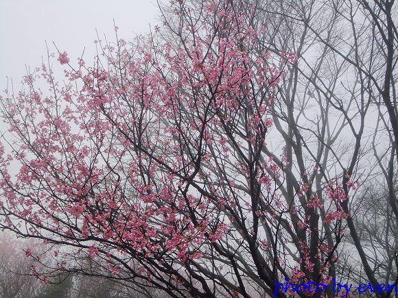 2012.03.04三芝花況17