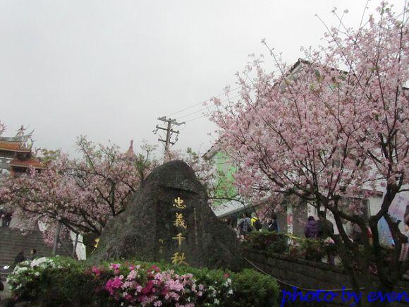 2012.03.19天元宮櫻花1