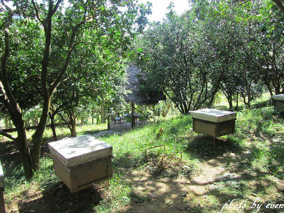 牧蜂農場3