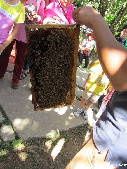 牧蜂農場4