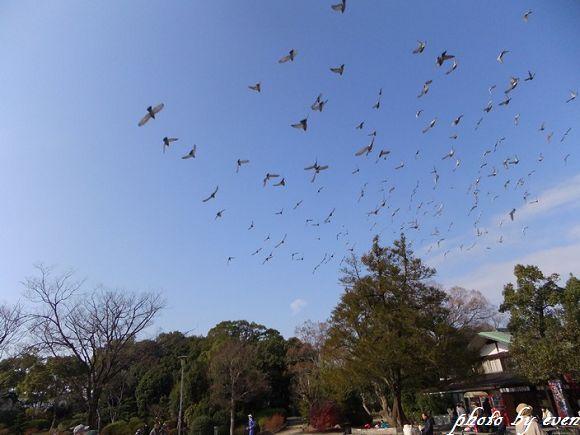 2012年大阪行-大阪城3