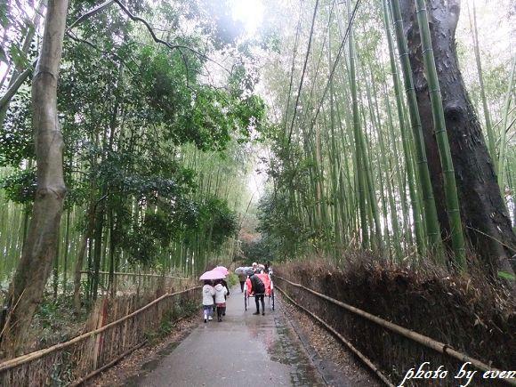 2011年日本旅遊嵐山8