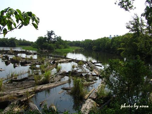 羅東林業文化園區15