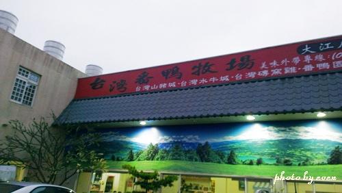 台灣番鴨牧場1