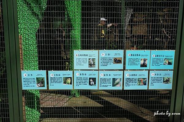 森林鳥花園11.JPG