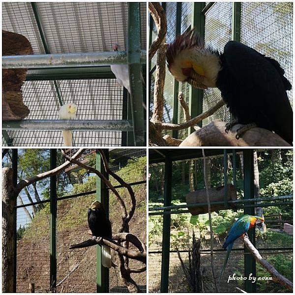 森林鳥花園9.jpg