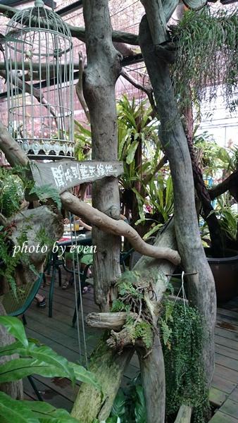 台北花卉村20140601 28.JPG
