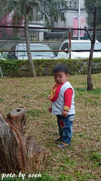 竹林山寺櫻花016-20150221