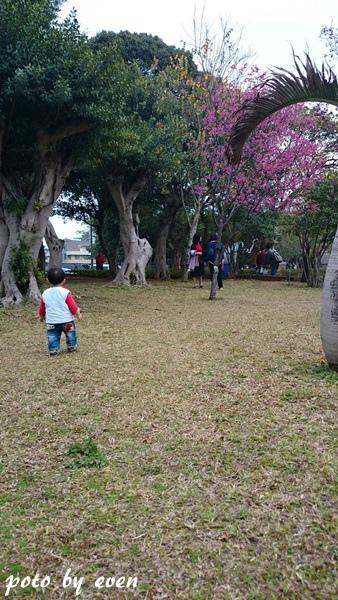 竹林山寺櫻花017-20150221