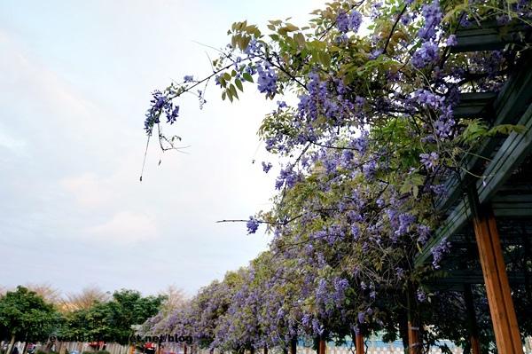 元生公園紫藤花06-20150326.JPG