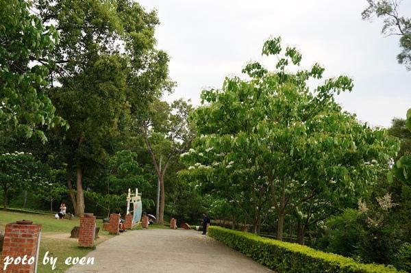 桐花公園123-20150419
