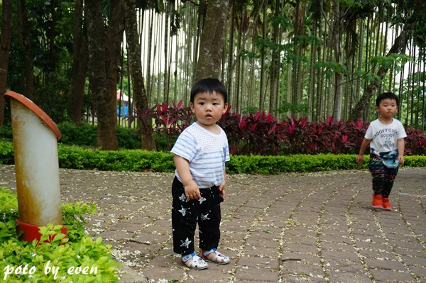 桐花公園107-20150419
