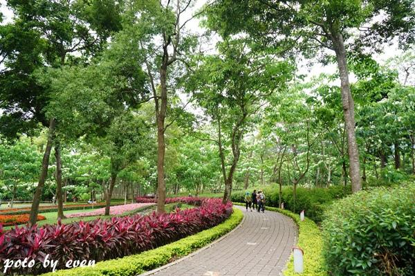 桐花公園054-20150419