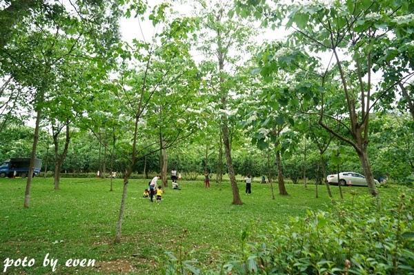 桐花公園052-20150419