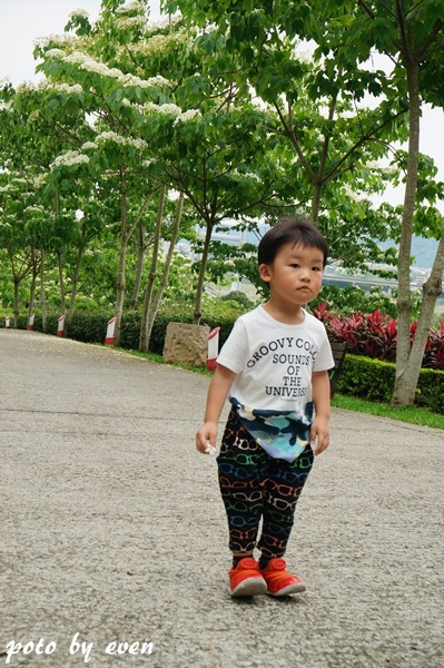 桐花公園038-20150419