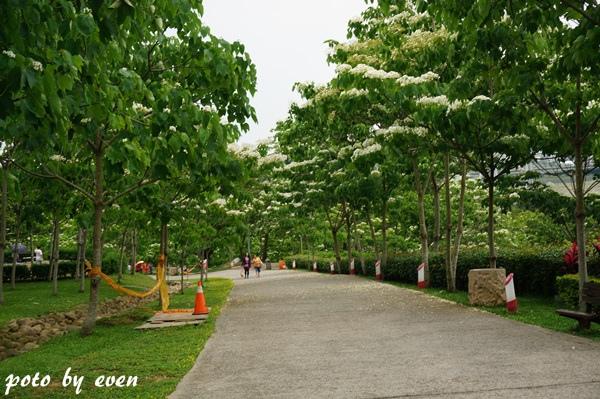 桐花公園039-20150419