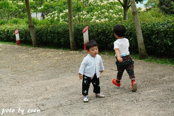 桐花公園031-20150419