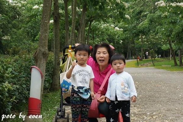 桐花公園016-20150419