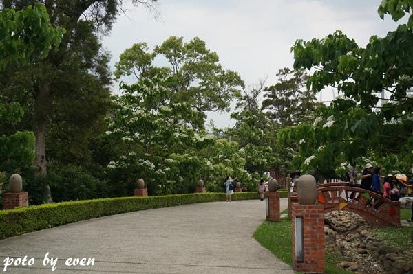 桐花公園002-20150419