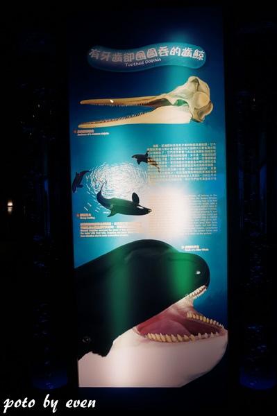 海洋公園094-20150614
