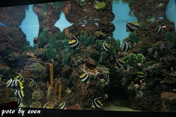 海洋公園103-20150614
